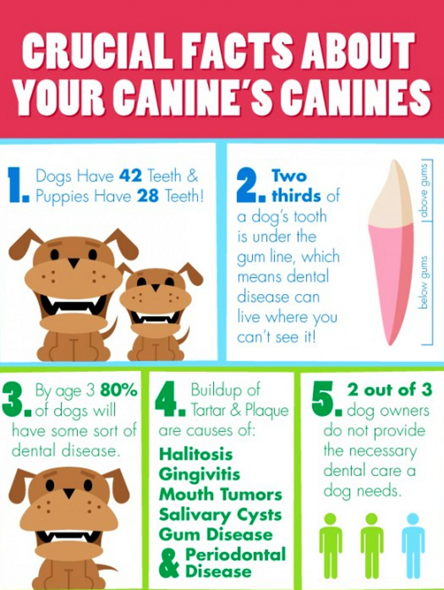 Info Graphics Caring For Your Dog S Teeth Mybetterdentists