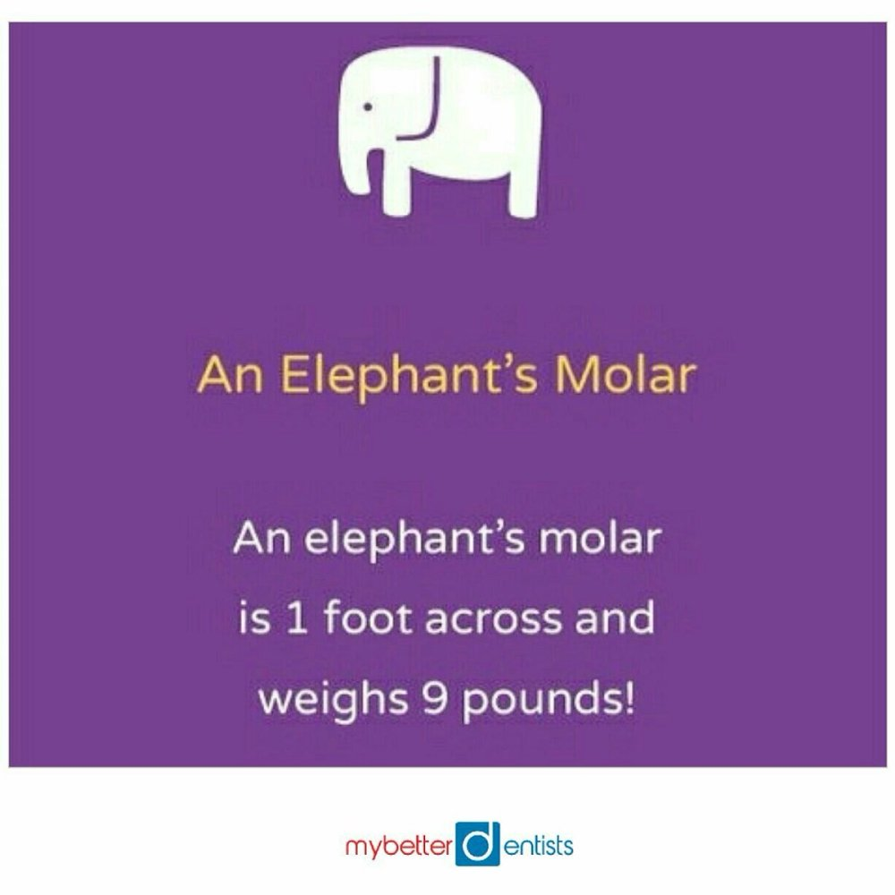 elephant molar.jpg